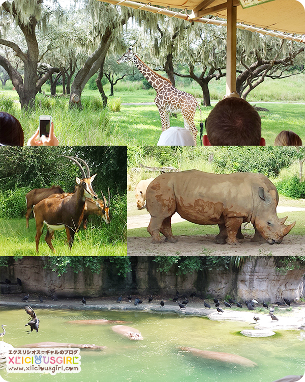walt disney world animal kingdom safari